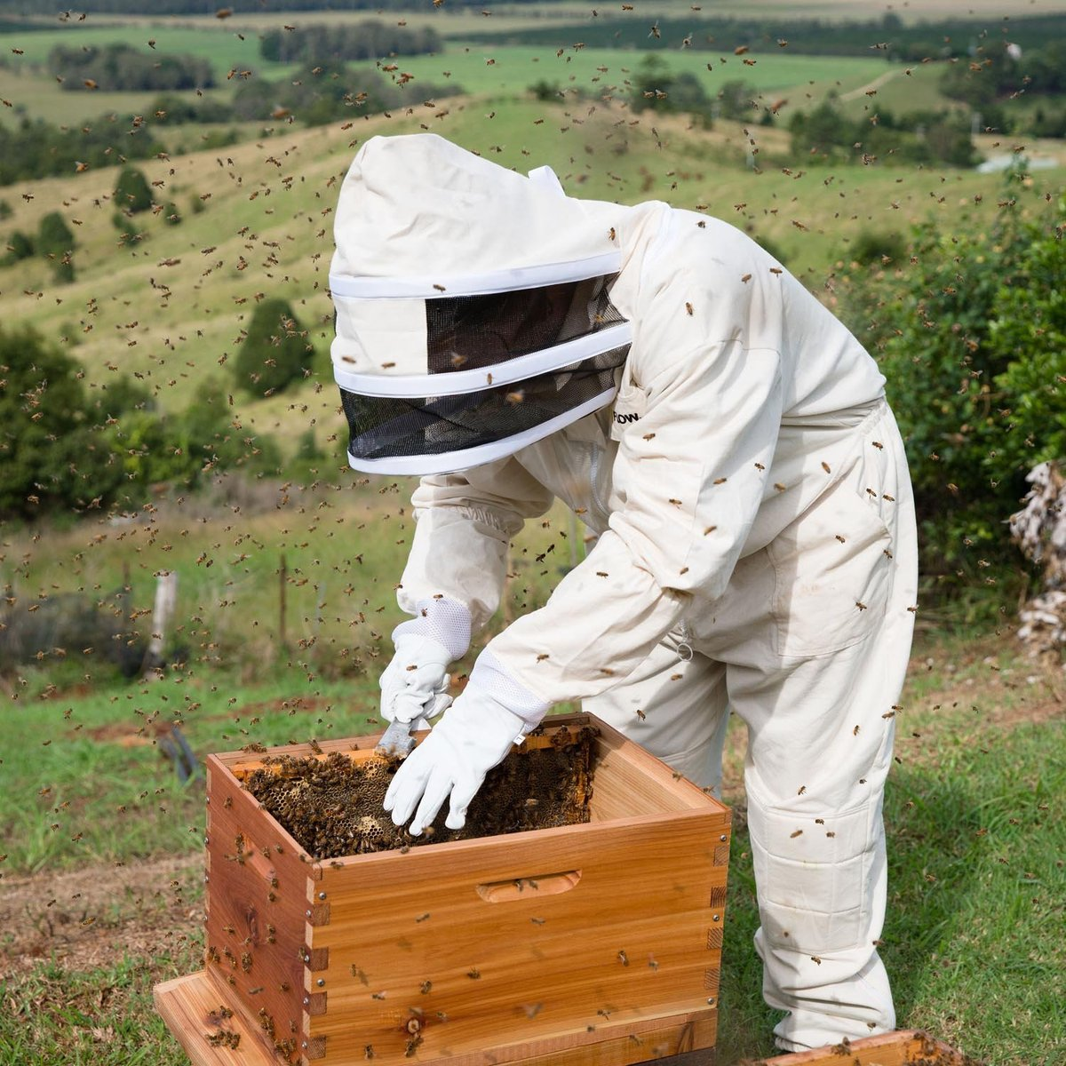 Bees & Co U74 Natural Cotton Beekeeper Suit