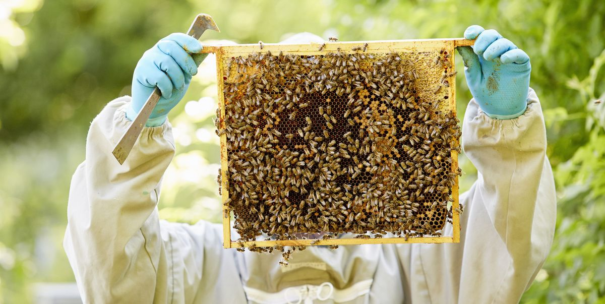 pallet of bees producing honey